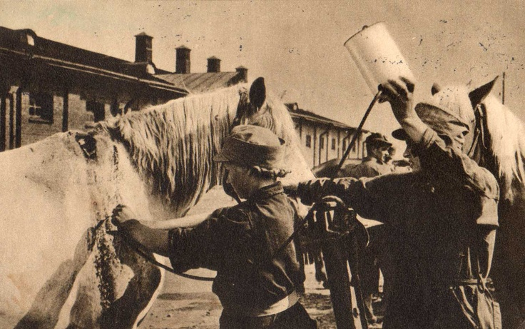 Volunteers from Lotta svärd organisation taking care about sick horse, Finland, ww2
