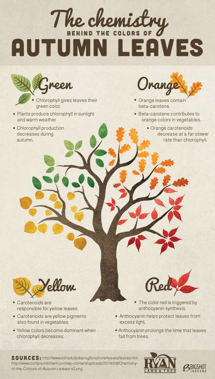 how to change leaf color in minecraft