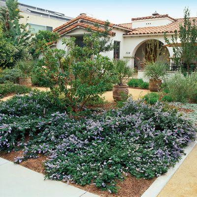 Ceanothus Yankee Point  http://www.laspilitas.com/nature-of-california/plants/151--ceanothus-griseus-horizontalis-yankee-point