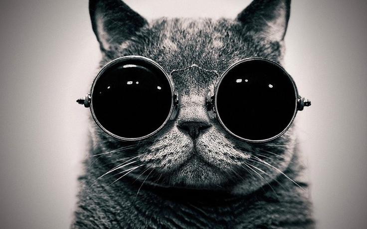 Steam punk kitty