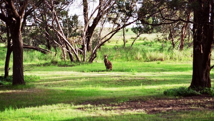 Nature at Glenhaven Park Camp