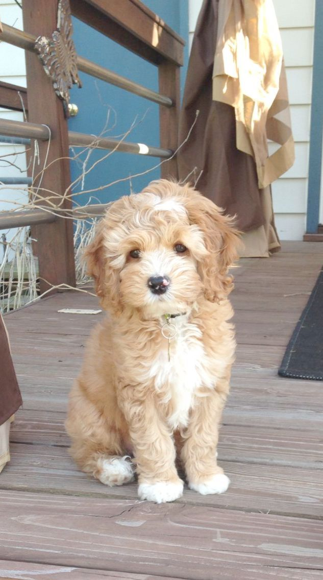 Check It Out Puppies For Sale Near Me Under 300 Baby