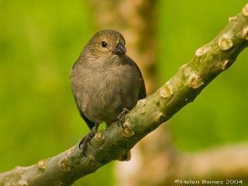 Bird watching in #Barbados