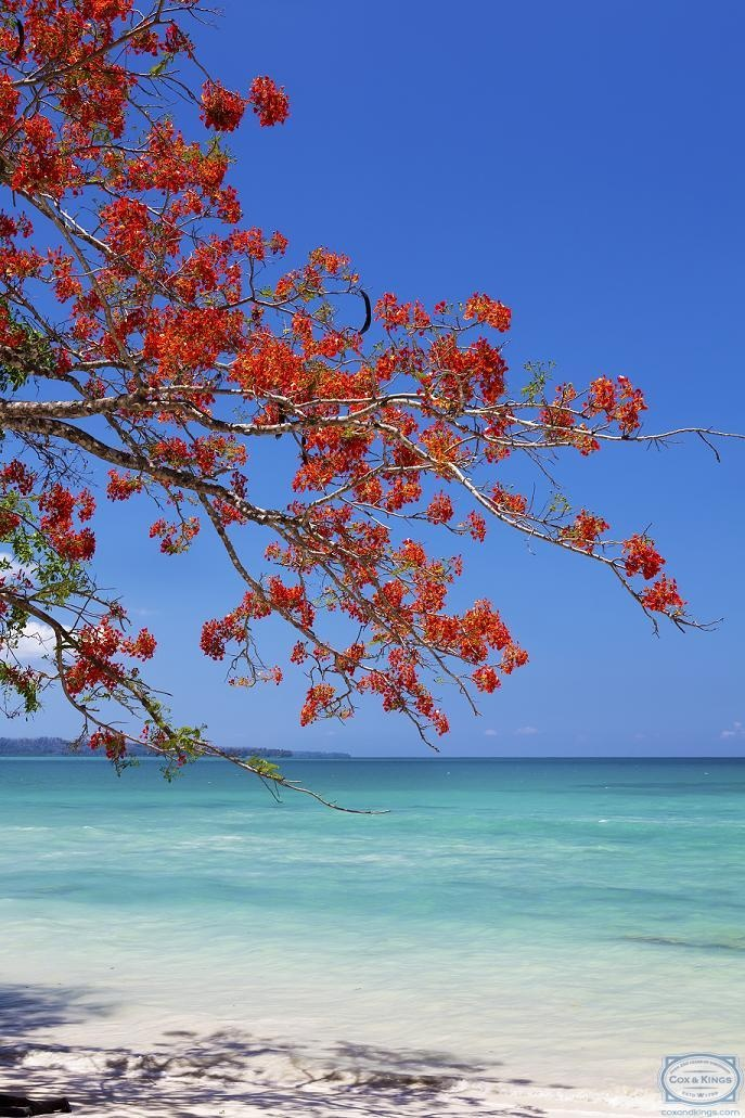The Andaman Islands: For the sun, sea and surf.  Swim in the crystal-clear waters, sunbathe on the beautiful white beaches. Go snorkeling and scuba-diving in the coral reef. #CoxandKings