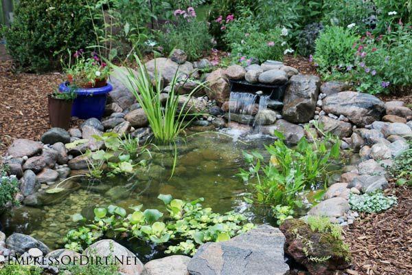 1000 Ideas About Goldfish Pond On Pinterest Garden Ponds Water Gardens And Ponds