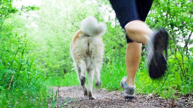 Canicross : courir avec son chien