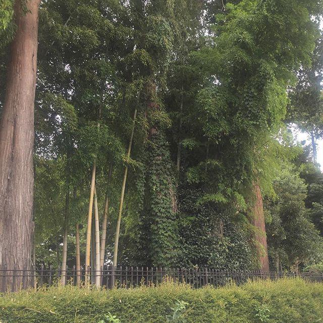 【kotomi_miyajima】さんのInstagramをピンしています。 《🌳🌳🌳🏫🌳🌳🌳 #これはなんでしょうか #正解は #my #母校 #ジャングル #顔に似合う #木が周りを覆ってる #もはや #森 #周りから何も見えない #秘密の花園 #女子校 #トトロ #田舎 #懐かしい》