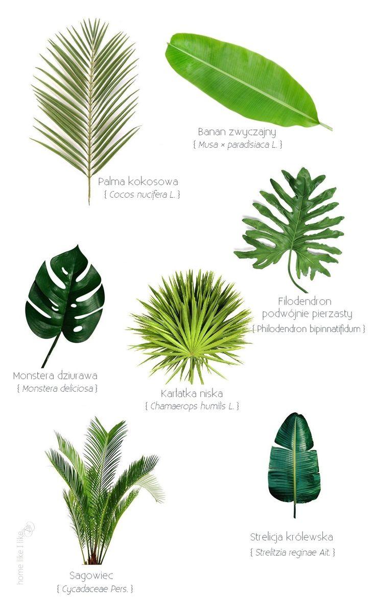 liście egzotyczne - exotic leaves - homelikeilike.com