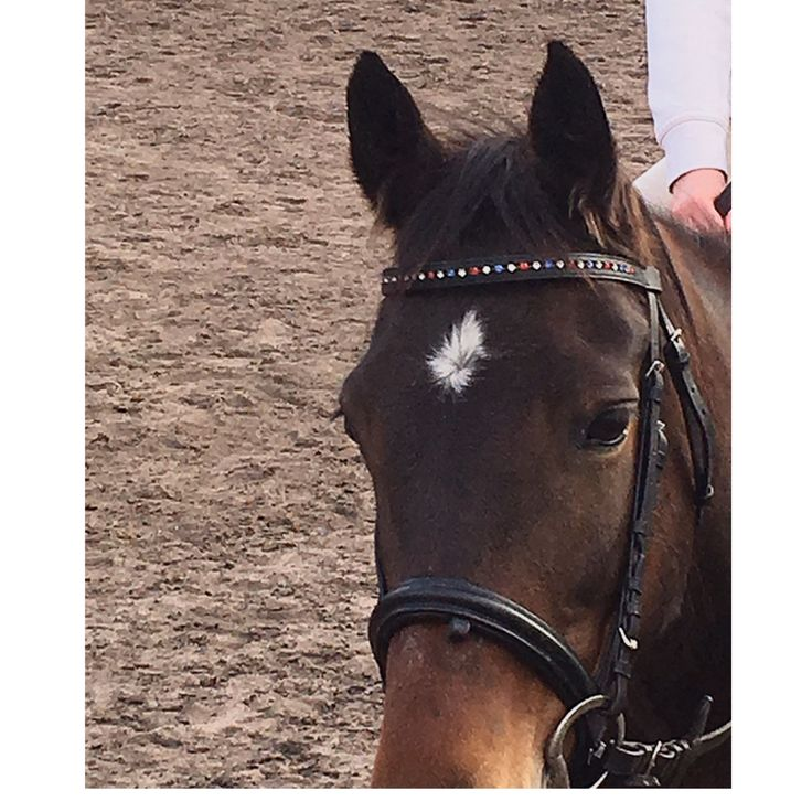 Hope❤️❤️❤️❤️❤️Hope is a standardbred I am riding her while Kahn is injured❤️❤️❤️❤️She is really good and fun ride❤️❤️❤️❤️❤️Love her❤️❤️❤️❤️