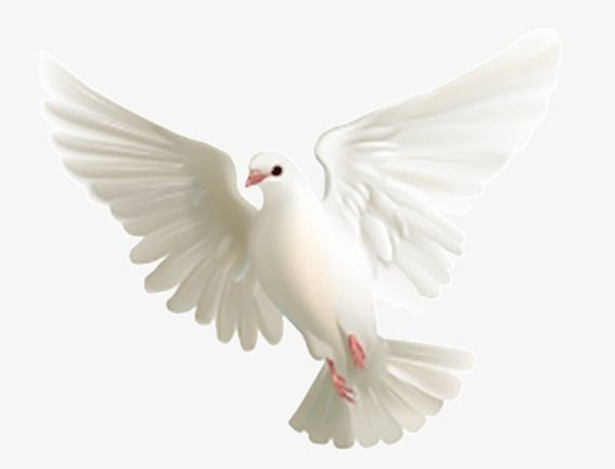 Imagen Png Paloma Blanca Volando Flying Pigeon Png Images Pigeon