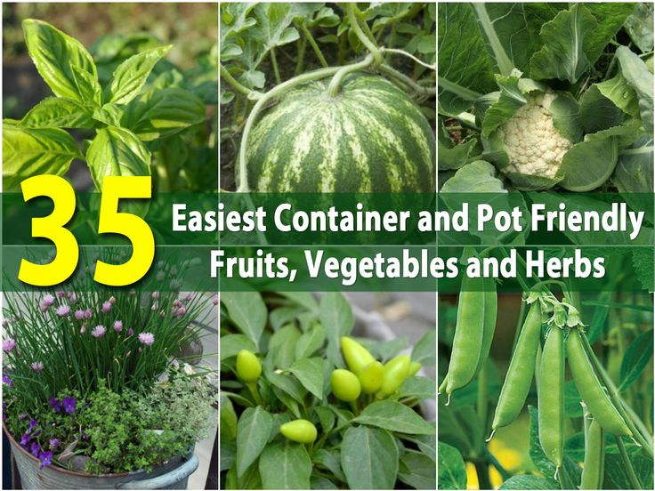 The 35 Easiest Container and Pot Friendly Fruits, Vegetables and Herbs With spring and summer often comes the desire to plant things. If you are someone who enjoys growing and preserving your own food but you're also someone who just doesn't have the outdoor garden space that you need, we've got a great collection of projects for you.
