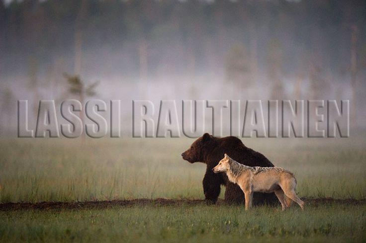 Photos by Lassi Rautiainen