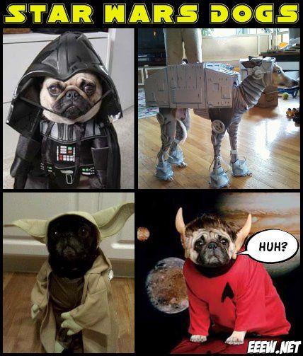 Star wars dogs pugtodopug pinterest - Star wars couchtisch ...