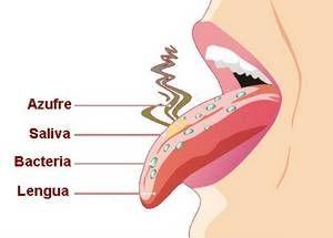 Que es halitosis y cuáles son sus causas | En ciertos casos el mal aliento puede ser un signo de ciertos trastornos o enfermedades. Sin embargo, por lo general se origina por una mala higiene bucal, así como por malos hábitos relacionados con ciertas adicciones, tales como el alcoholismo y el tabaquismo, aparte de una alimentación inadecuada y desequilibrada. Lee más: https://comocuroelmalaliento.com/que-es-la-halitosis/