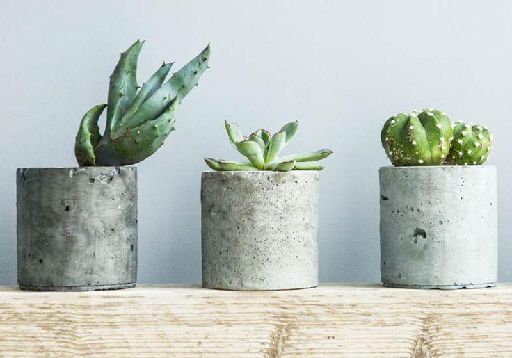 succulents in simple concrete cast planters