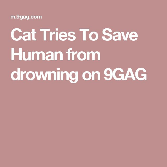 Cat Tries To Save Human from drowning on 9GAG