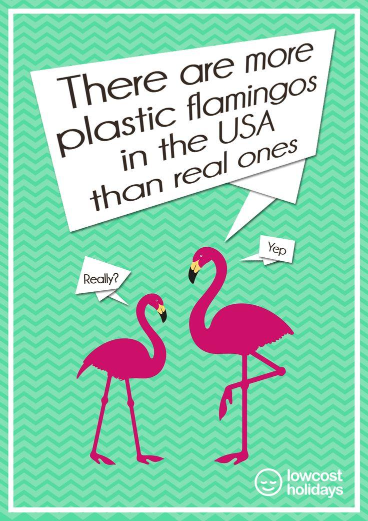 Best 20+ Flamingo facts ideas on Pinterest | Flamingos ... - photo#23