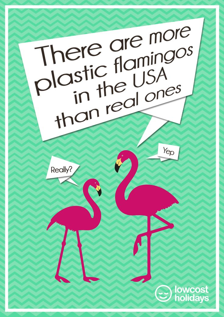 There are more plastic #flamingos in the #USA than real ones! | Fun Facts | lowcostholidays.com