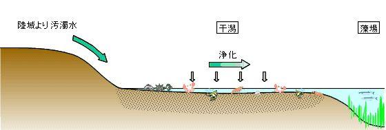 JWG ジャパン・ウォーター・ガード 水の学習室 3水環境対策編 §4.海域での浄化対策