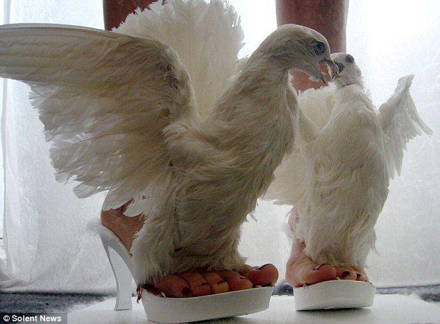 ?: Real Life, Crazy Shoes, Lady Gaga, Iris Schieferstein, Fashion Design, Animal Design, High Heels, Shoes Art, Dolls Shoes