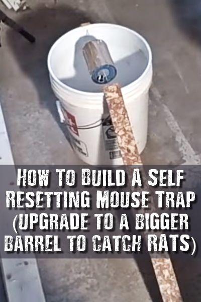 25 best ideas about rat traps on pinterest three blind mice live rat traps and rat infestation. Black Bedroom Furniture Sets. Home Design Ideas