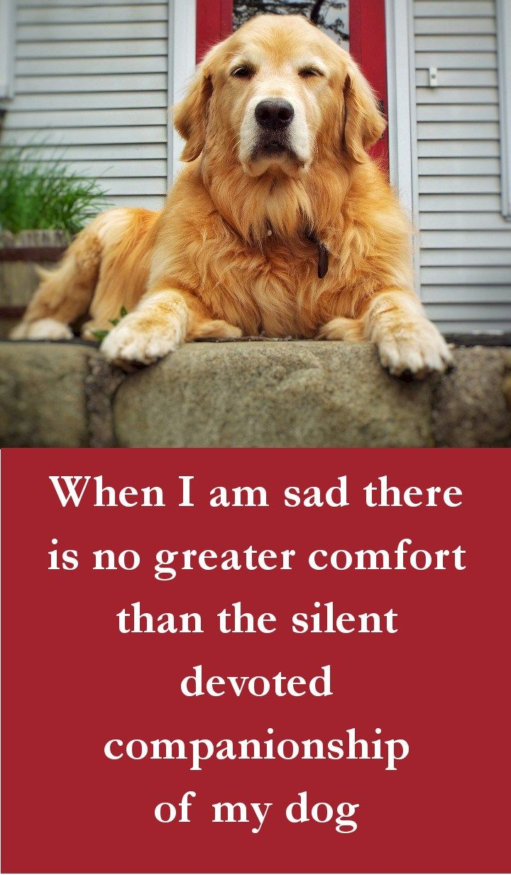 Dog Quotes - When I am sad there is no greater comfort than the silent devoted companionship of my dog