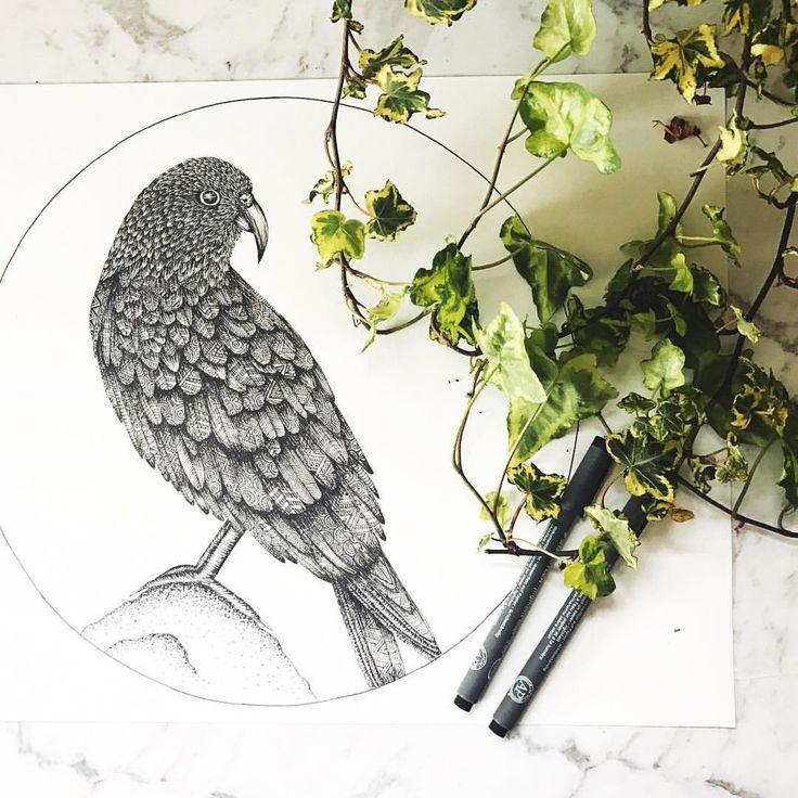 "97 Likes, 8 Comments - chelsea-Mae Art (@cmae.art) on Instagram: ""next bird- the Kea!"""