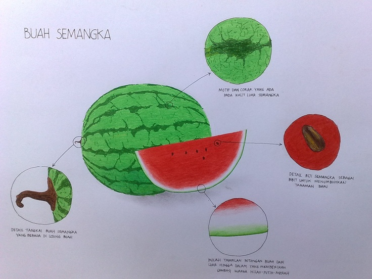 Semangka..