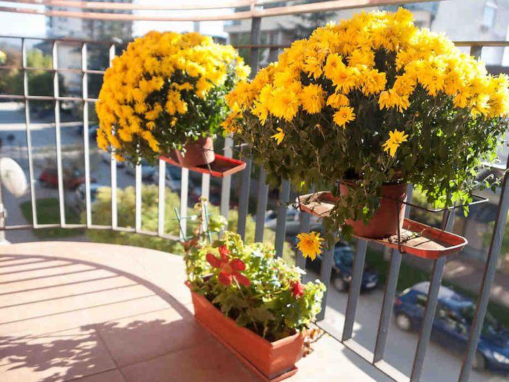 Parvekkeen kasvit ja kukat