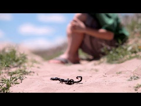 "The Sting of the Scorpion-Great Mormon Message video of a boy who learns that ""Flip flops aren't shoes""."