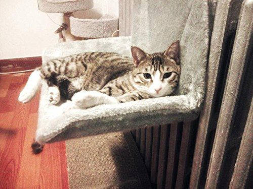 #Cats #CatHarnesses #CatLeashes #CatMuzzles #CatIDTagsCollarAccessories #CatCratesKennels #CatcatHouses #CatKennelCovers #CatOutdoorPens #CatDoorbells #CatDoors #CatGates #CatPlaypens #CatSafetyRamps #CatAutomaticFeeders #CatBowls #CatFeedingMats #CatFoodStorage #CatFountains #CatNursingSupplies #CatRaisedBowlsFeedingStations #CatTravelBowls #CatWaterBottles #CatFleaTickCollars #CatFleaCombs #CatcatFleaPowders #CatFleaDrops #CatTickRemoverTools #CatCarpetFleaPowdersSprays #CatFleaShampoos…