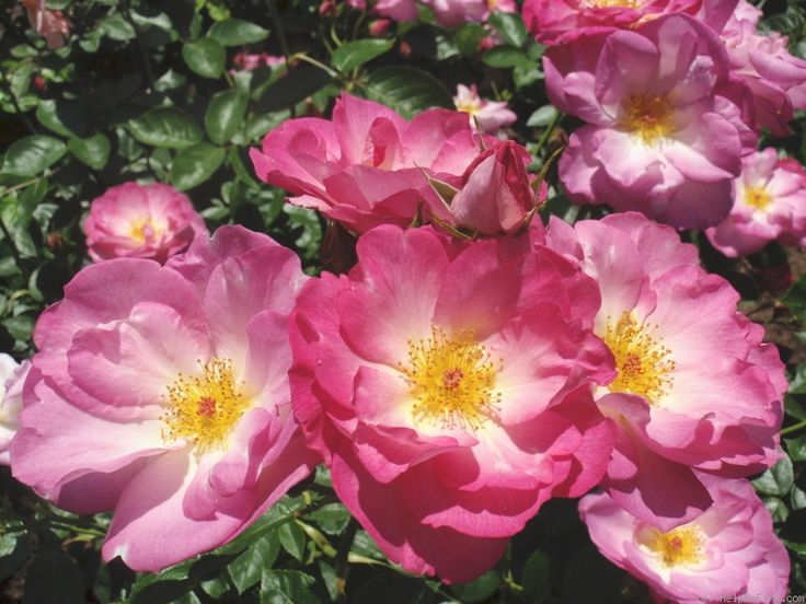 roses escapades Va-dj sr - sex escapades vol 16-2017 roses 06 rick ross feat scanner internet archive python library 140.