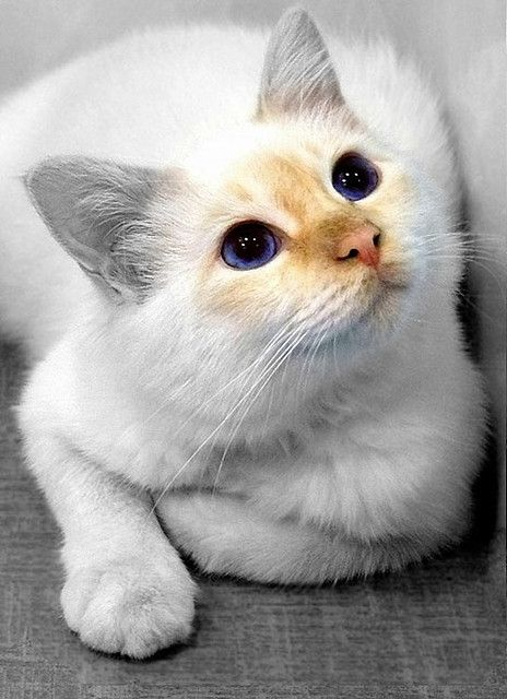 How gorgeous is this cat?