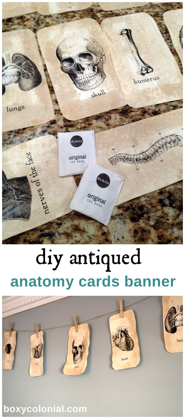 Learn to make and antique these DIY anatomy cards (from free printables) for a spooky Halloween banner