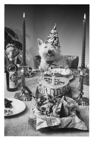 63 Best Westie Cakes Cookies Images On Pinterest Westies