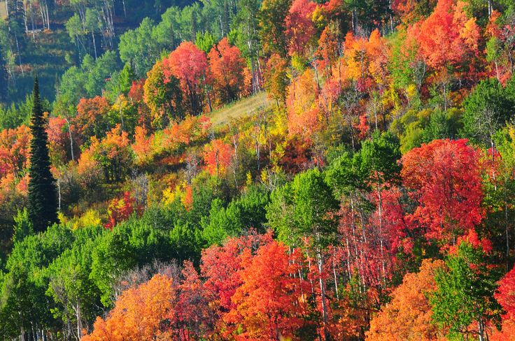 Park City, Utah fall foliage | Fall in Park City, UT | Eric E Photo