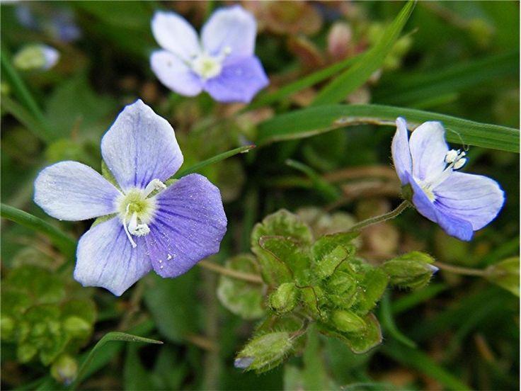 Entretien pelouse – comment se débarrasser des mauvaises herbes