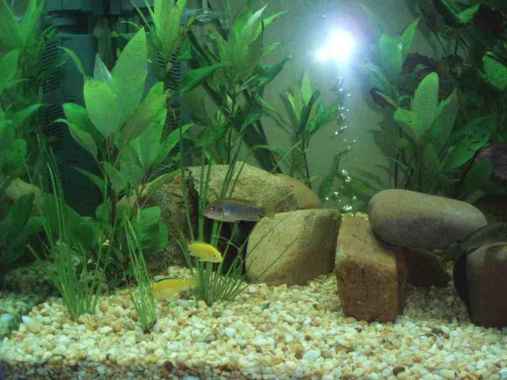 cheap aquarium decorations - Freshwater Aquarium Design Ideas