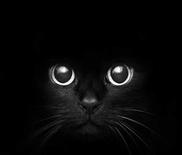 Impressive Cat Photography Inspirations-5
