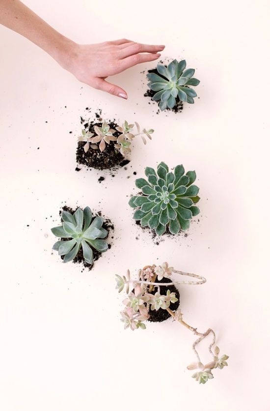 tips and tricks on how to keep your succulents alive!