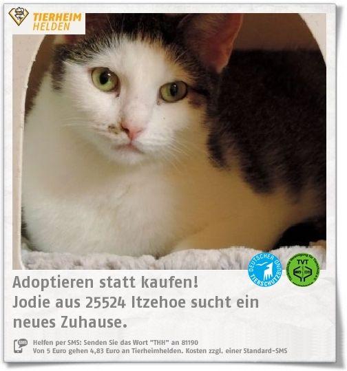 Jodie hat ihre Kitten aufgezogen und sucht im Tierheim Itzehoe nun selbst ein Zuhause.  https://www.tierheimhelden.de/katze/tierheim-itzehoe/ekh/jodie/14277-1/  Jodie ist eine sehr sanfte und anhängliche Kätzin. Artgenossen mag sie nicht.