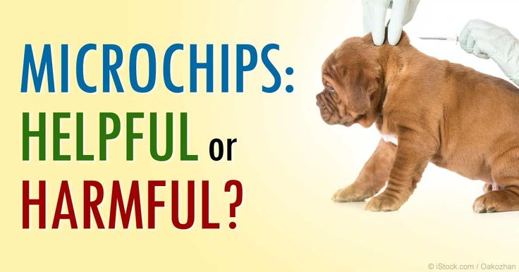 Microchipping has become extremely popular, but there are pros and cons on this method of ID'ing your pets.