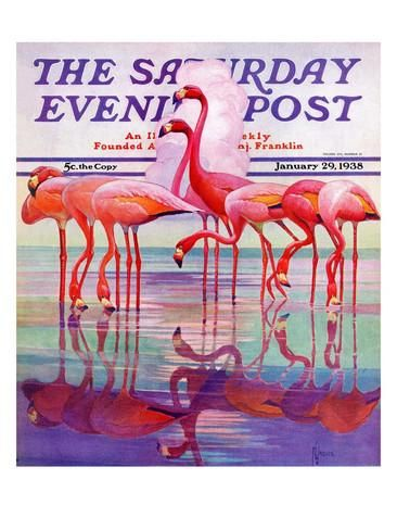 """""""Pink Flamingos,"""" Saturday Evening Post Cover, January 29, 1938 Giclee Print by Francis Lee Jaques at AllPosters.com"""
