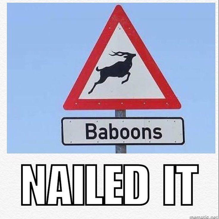 You had one job #southafrica #baboon #onejob #nailedit