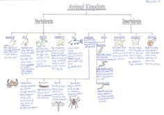 Classification Of Animals Vertebrates And Invertebrates