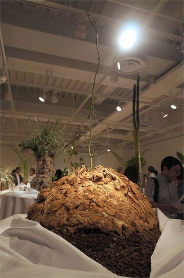 Dioscorea elephantipes(メキシコ亀甲竜)日本史上最大級の亀甲竜。世界中の植物園が欲しがる巨大な一品