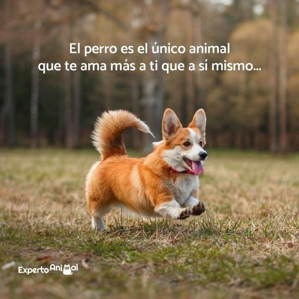 Frases De Perros Perros Frases Perros Animales Frases
