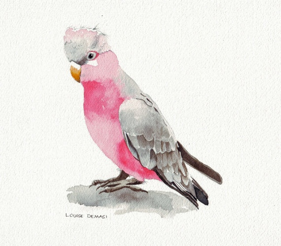 Original watercolor painting of a rose breasted cockatoo - stunning bird!!