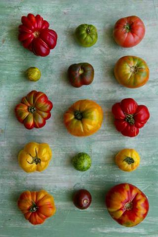 Heirloom tomatoes #coloreveryday