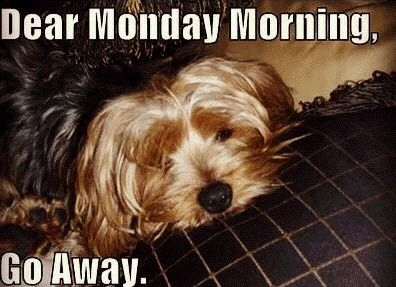 Dear Monday Morning funny quotes cute quote morning puppy monday days of the week humor monday quotes